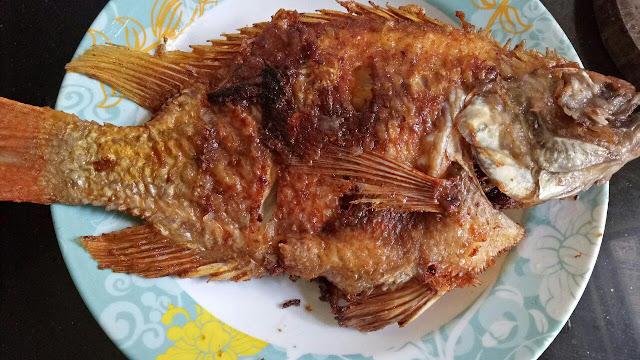 ikan talapia merah