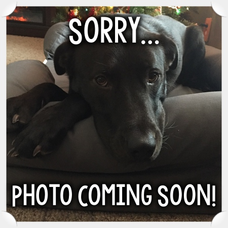 sorry, image coming soon