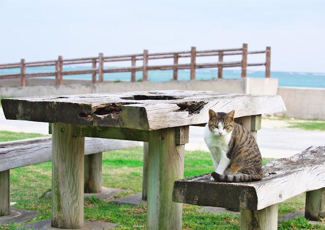 猫のいる風景の写真