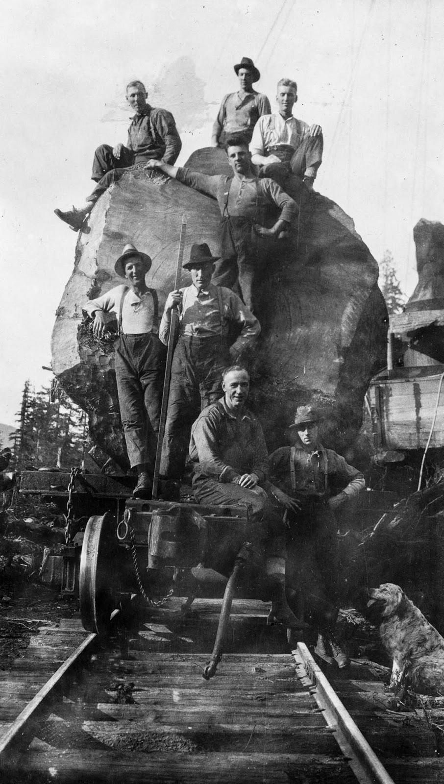 Loggers pose on a fir log loaded onto a train. 1920.