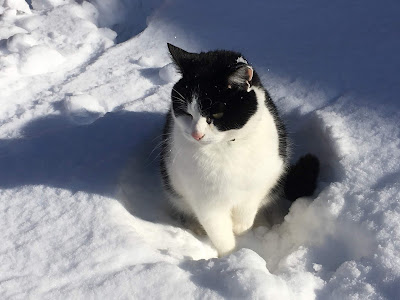 Black and white cat sitting in the snow