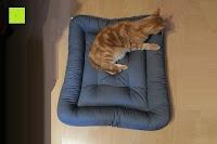 Katze: Palina Hundekissen 95° waschbar | Hundebett | Herstellung in Deutschland