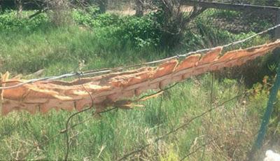 Kerangka panjang di pagar.