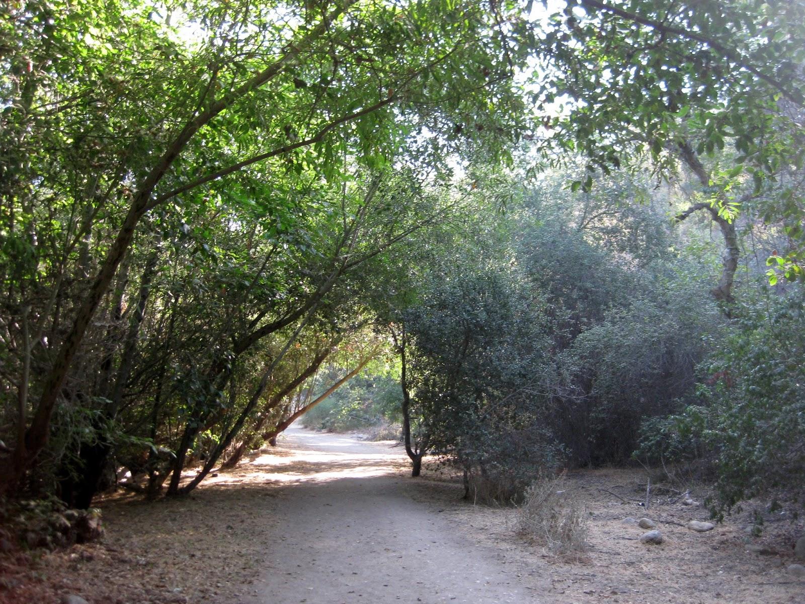 Trail Run LA: Arroyo Seco Trail - Linking South Pas to