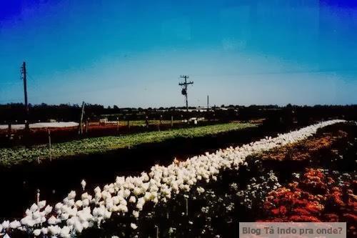 fazenda de flores