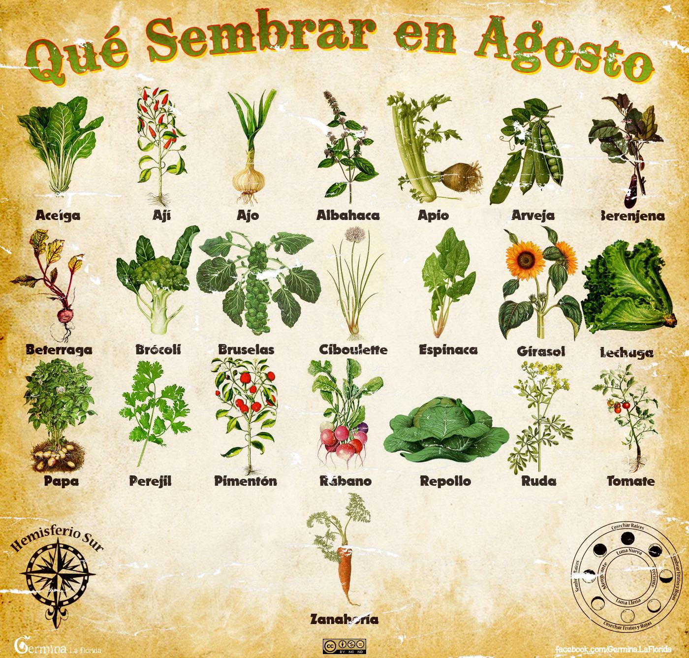 Germina la florida calendario de siembra de agosto - Que plantar en el huerto ...