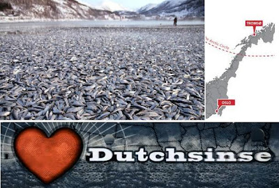 dutchsinse:  expect quake after dead fish wash ashore in norway