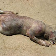 10 years later, Montauk Monster still causes controversy