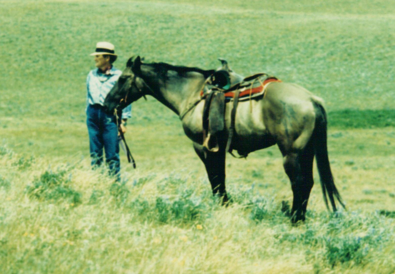 A Veterinarian's Take: Horse Human Bond