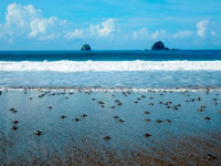 Pantai Sukamade Banyuwangi, Sensasi Liburan ke Istana Penyu