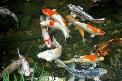 Tricks In Kerala Aquariums India Mailnly Available Aquarium Fishes