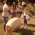 Go vegan! No próximo epísódio de 'Adotada', Mareu mora com família louca por animais