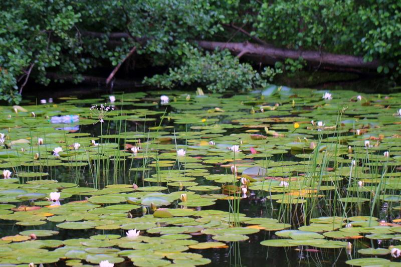 Reisen mit dem Bunbo 2015: Seerosen auf dem Röblinsee | Arthurs Tochter Kocht by Astrid Paul