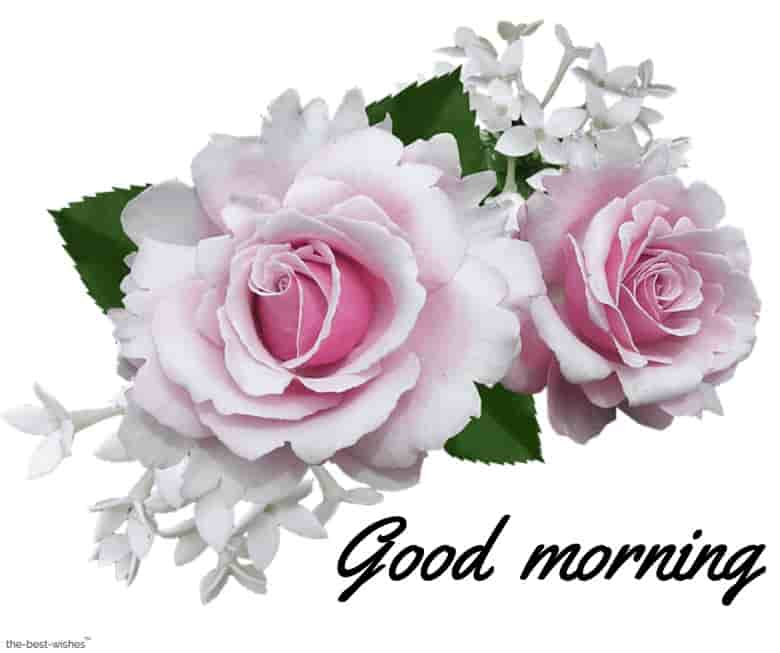 animated good morning pink rose