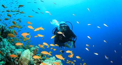 Netrani Island Scuba Diving