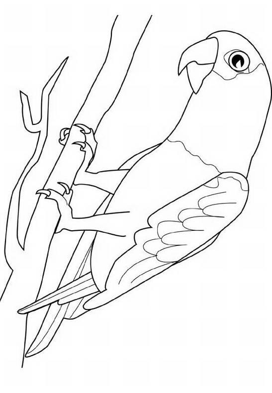pappagallo, uccello, ramo,