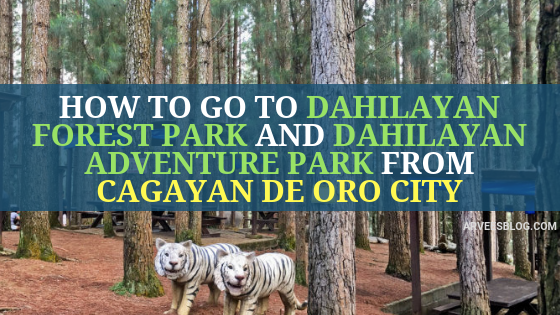 How to go to Dahilayan Forest Park from Cebu and Manila via Cagayan de Oro