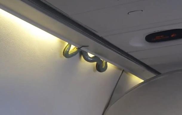Змія на борту літака викликала паніку
