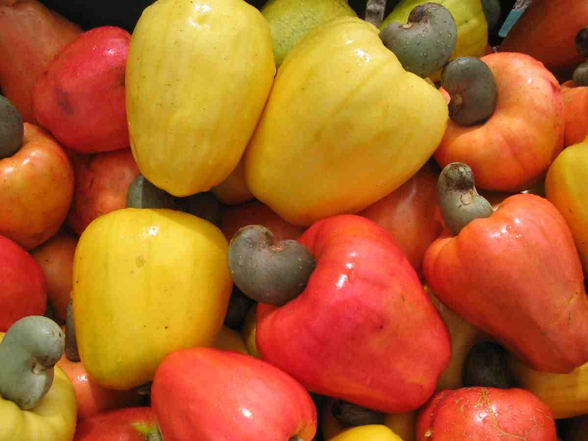 is a cashew a fruit passion fruit tree