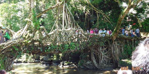 Living-Root-Bridge-Mawlynnong