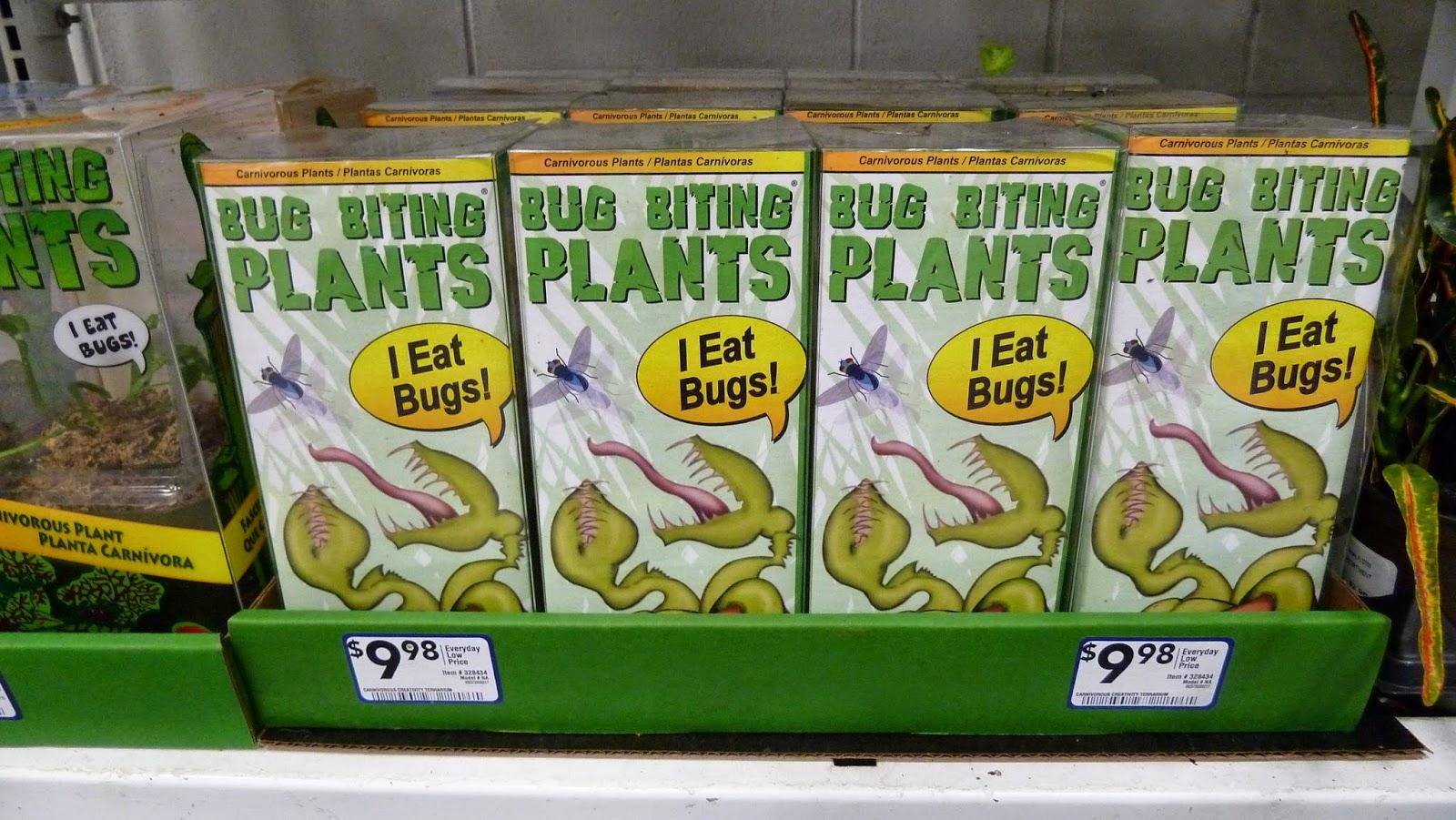 Hooray plants bug biting plants terrarium kit from lowes