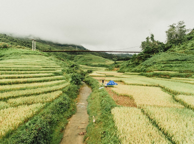 Visit Ha Giang season of ripe rice, contemplate the idyllic life 1