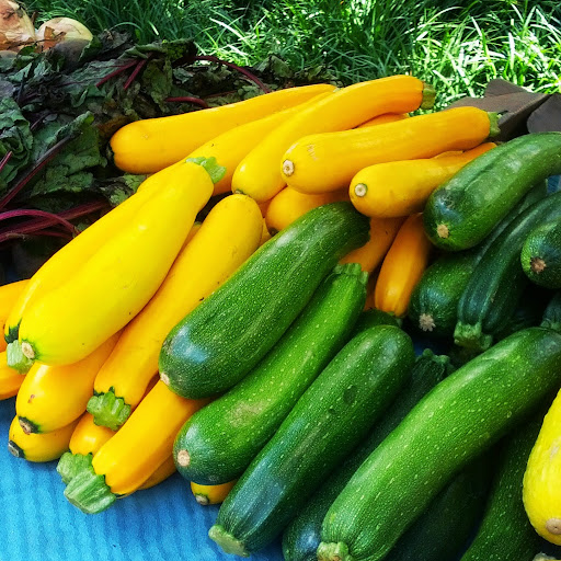 Yellow-and-Green-Zucchini-tasteasyougo.com