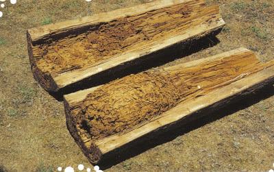 nido de termitas en tronco de arbol
