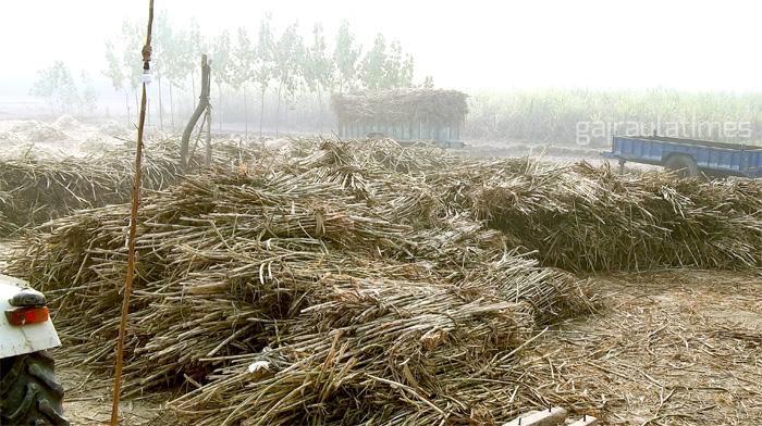 sugar-cane-farmer-mill