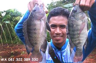 Master Umpan Ikan Nila
