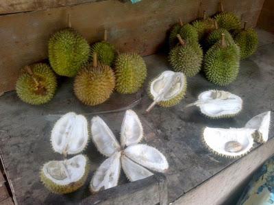 Buah Durian berlimpah ketika panen raya