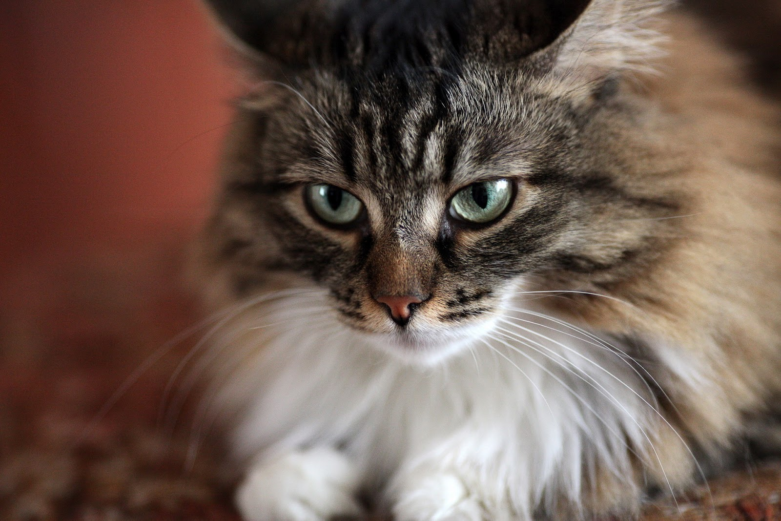 gato - photo #20