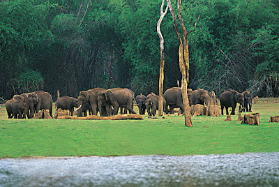 Thekkady Elephant Wildlife