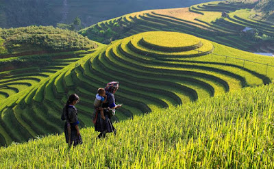 Terraced fields in Sapa