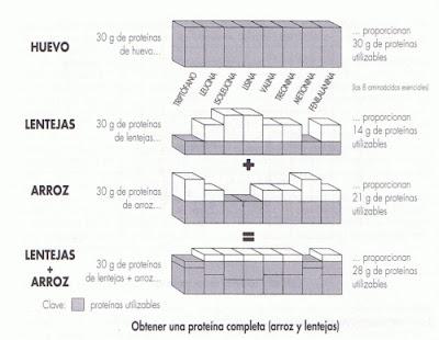 tabla comparativa de la composición proteica del arroz, las lentejas y el huevo