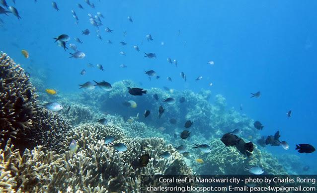 tropical fish and coral reef in Manokwari sea