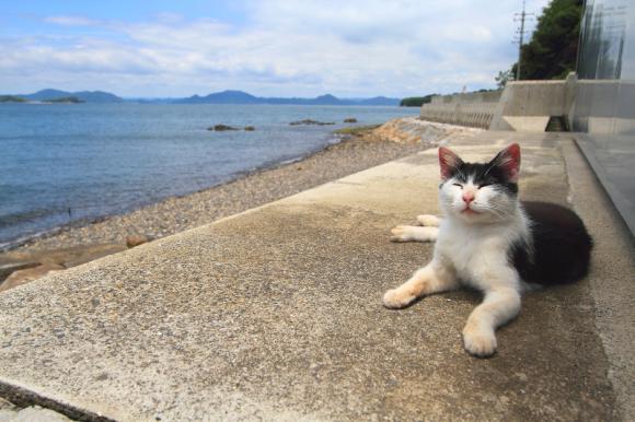 """Khám phá 11 """"thánh địa"""" nổi tiếng dành cho mèo tại Nhật Bản"""