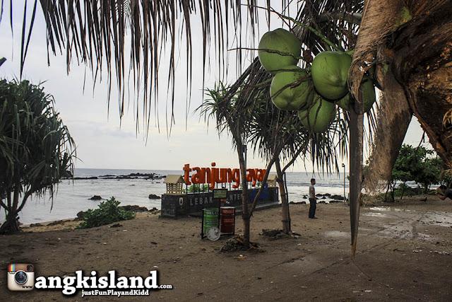 kelapa sawarna