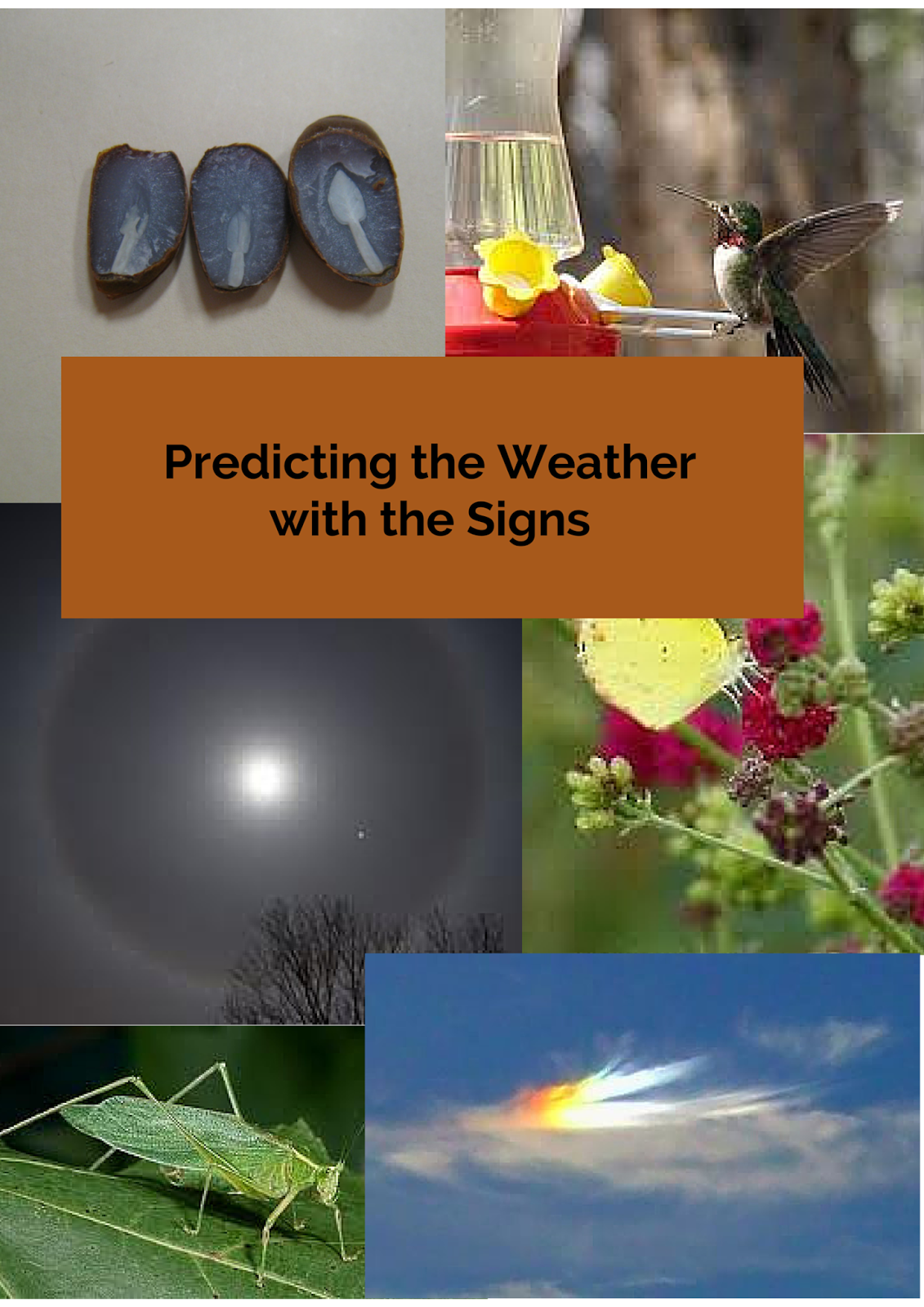 Some would call if folklore, I call it observation. Watching the signs will give you a heads up on what the weather will be like.
