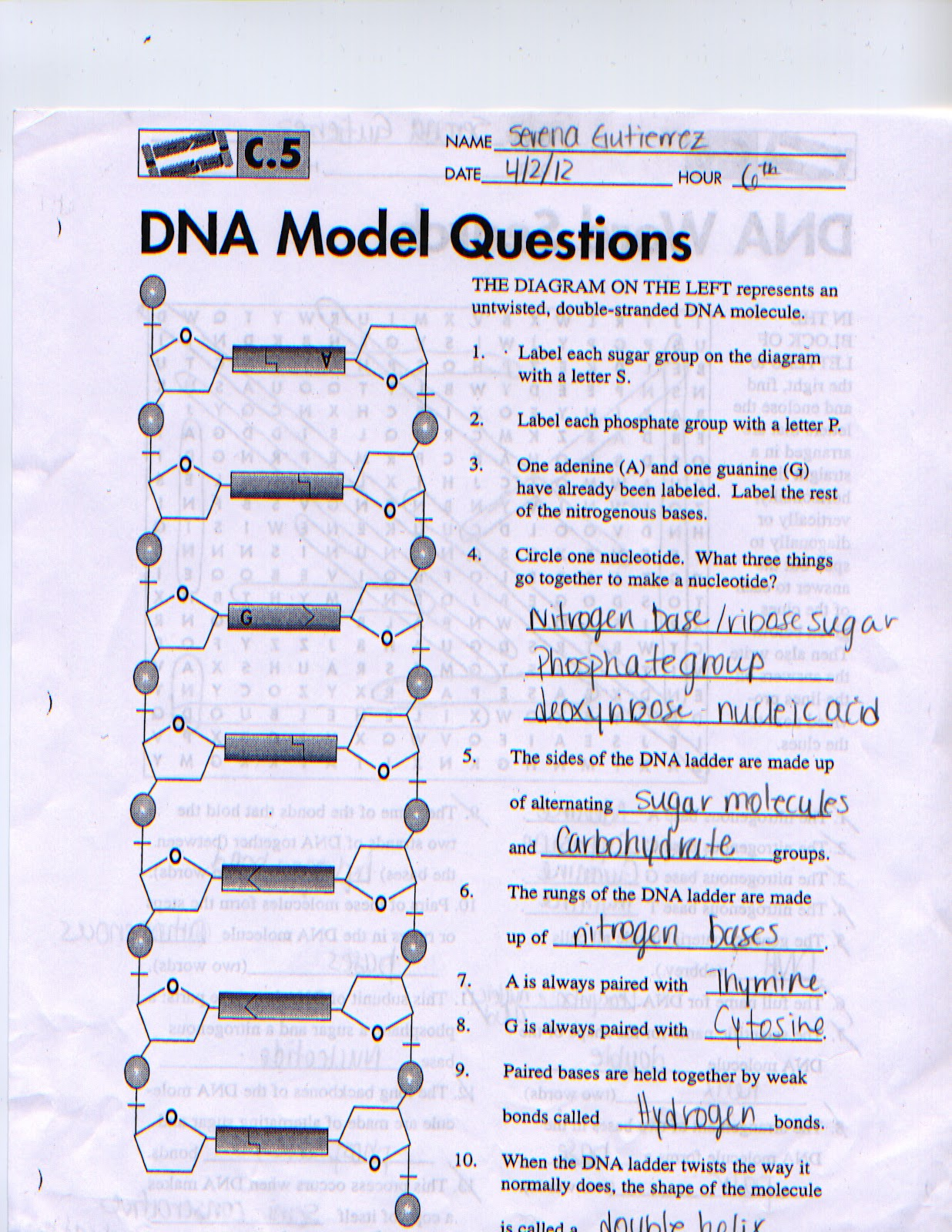 The Dna Double Helix Coloring Worksheet Answers