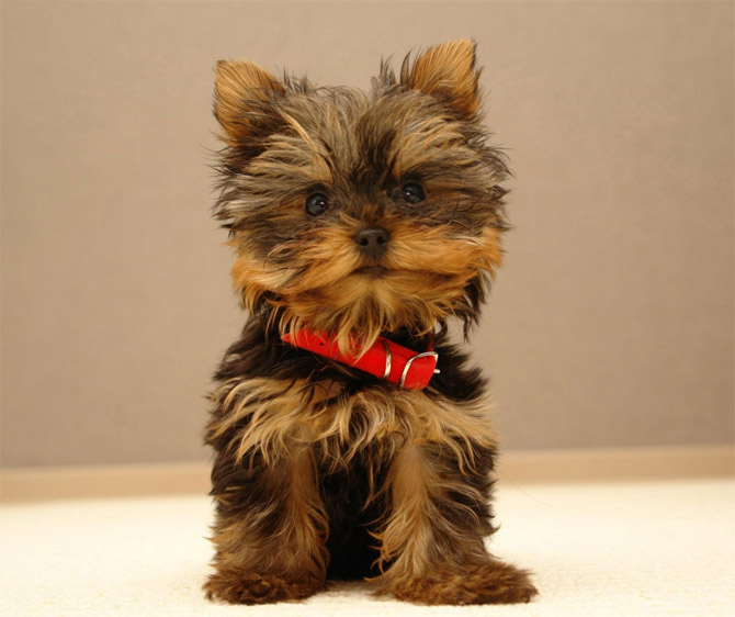 Cute Animals: Top 20 Cutest Dog Breeds