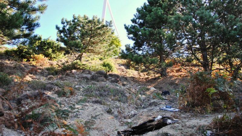 Νεκρό όρνιο καταδεικνύει την ανάγκη ορθής χωροθέτησης αιολικών πάρκων στη Θράκη