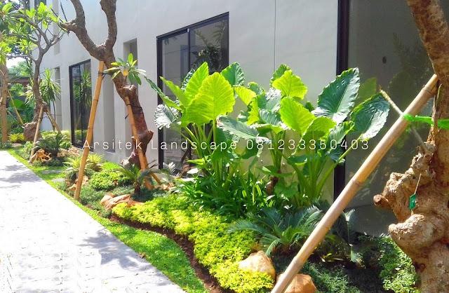 Tukang Taman Surabaya Sidoarjo Gresik