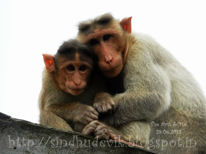 Mother's Love - A Pair of Mother And Son Monkeys
