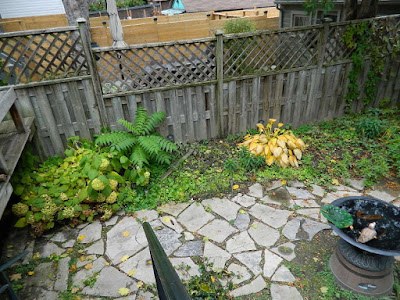 Toronto Leslieville Fall Garden Cleanup Before by Paul Jung Gardening Services--a Toronto Organic Gardening Services Company