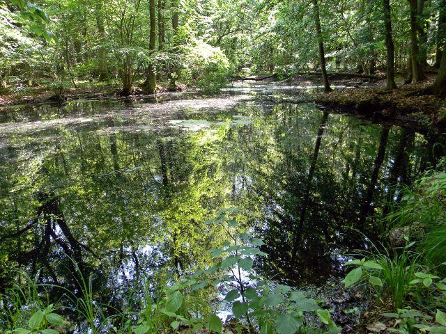 oczka wodne, rezerwaty przyrody
