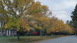 Franklin fall foliage photos 3