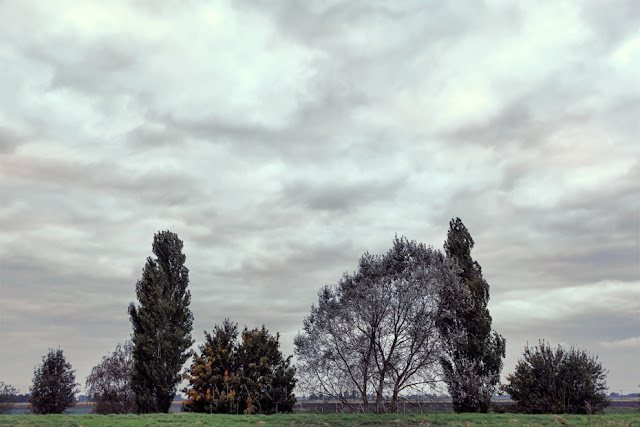 Trees along the Old Bedford River at Ouse Washes in the Cambridgeshire Fens