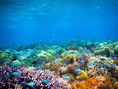 Panorama Bawah Laut