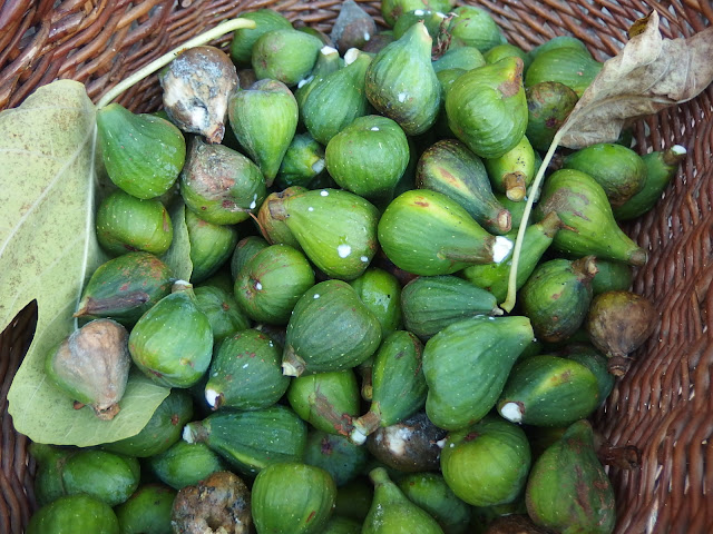 The figs that didn't make it - 300 to be precise